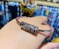 阿赞宋玉 情财双降符管 符឴管是纯银材质